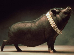 Pigs_and_Pearls